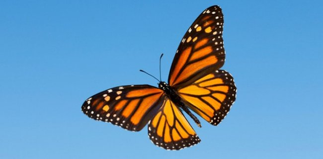 30 Beautiful Facts About Butterflies