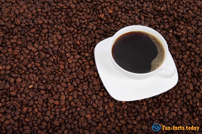 25 Facts about Coffee